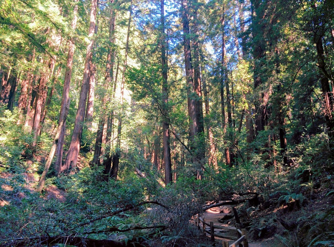 Dense redwood and Douglas fir forest like this stretches for miles through a gorgeous valley.